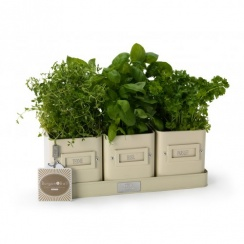 Burgon & Ball Herb Pots in a Tray - Jersey Cream